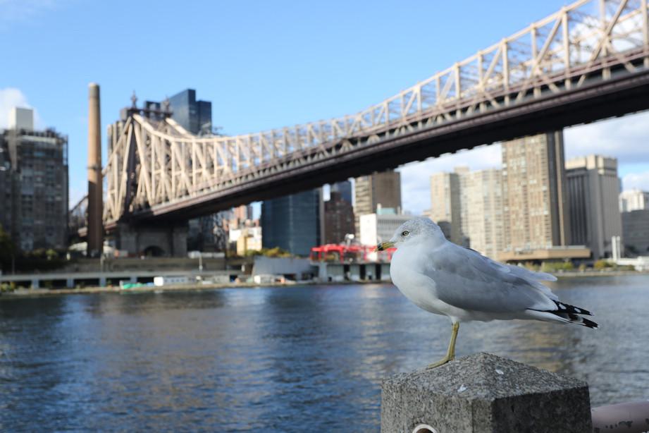 NYC097